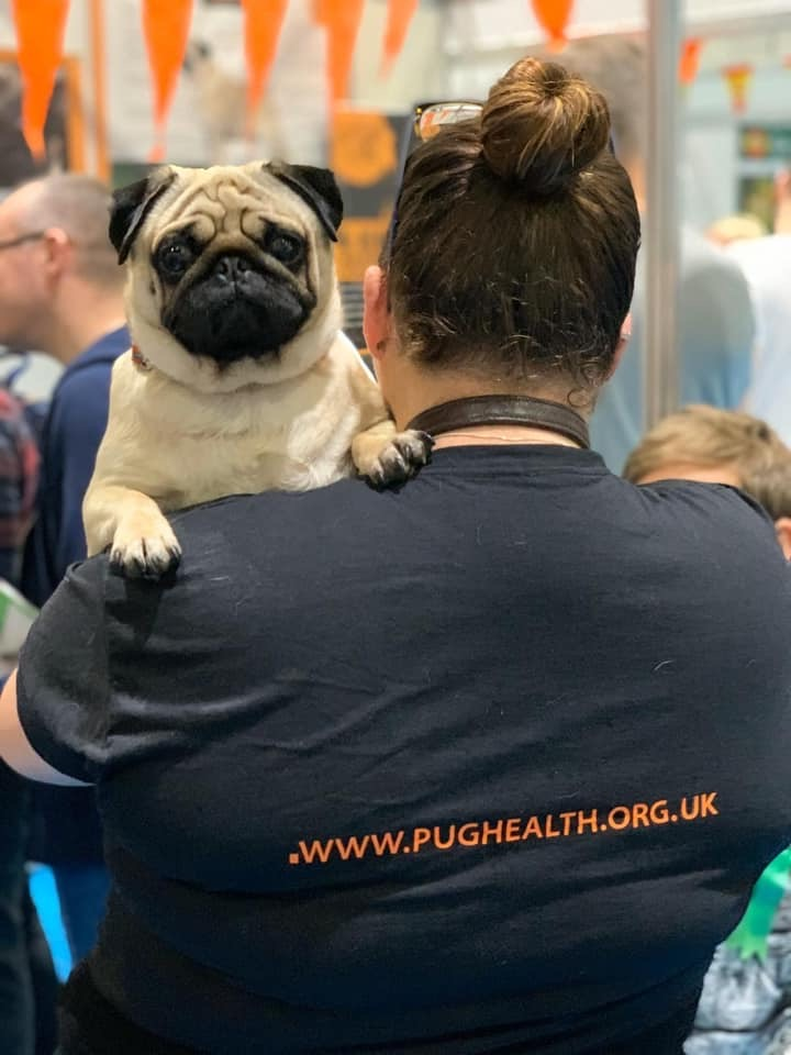 New DNA Testing Scheme for the Pug